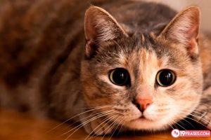 Frases sobre los gatos más divertidas